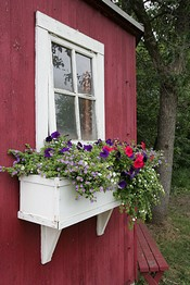 Birds Nest Cabin Window Box
